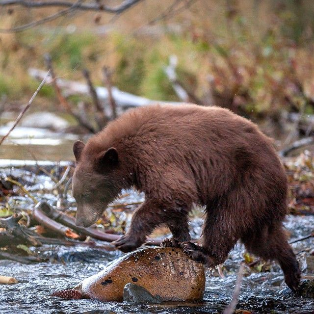 17 Best images about Wildlife in South Lake Tahoe on ...