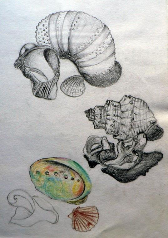 International GCSE Art sketchbook page exploring natural shell forms