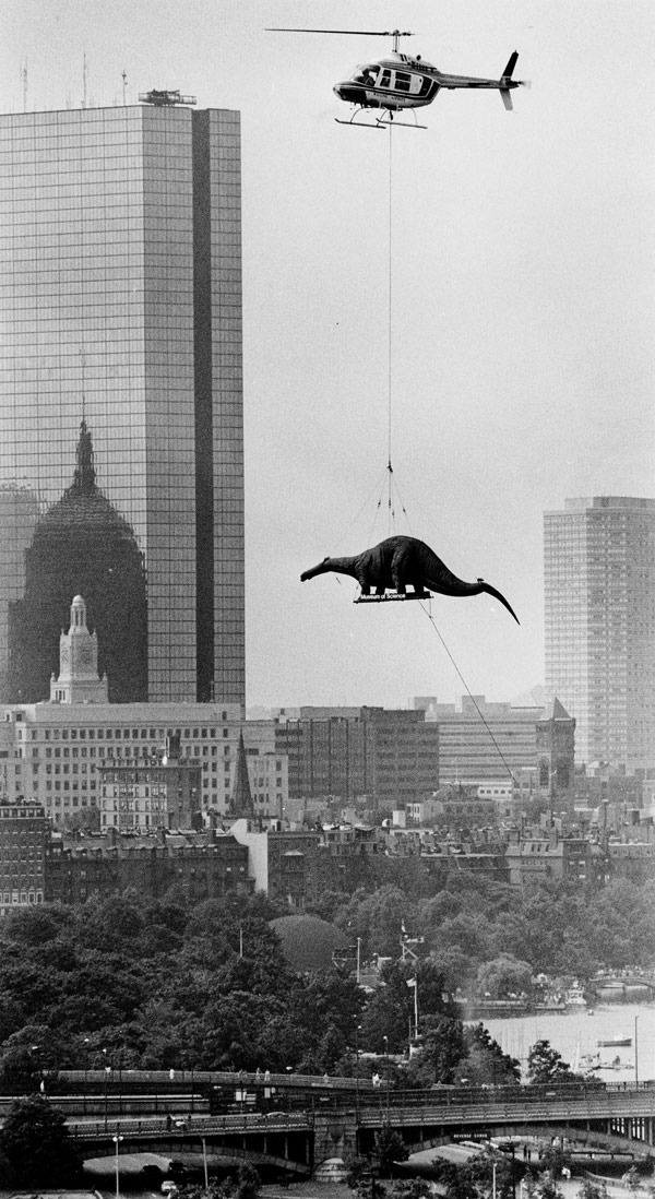 Dinosaur being delivered to the Boston Museum of Science by helicopter in 1984. Arthur Pollock.