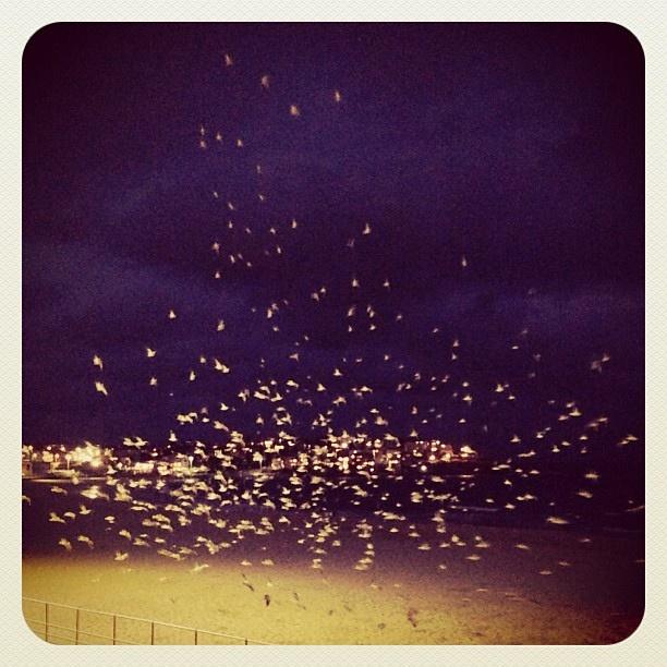 Flock of Seagulls at Bondi #flock #seagulls #birds #sky #atbondi #bondi #gulls #dusk #sydney #beach