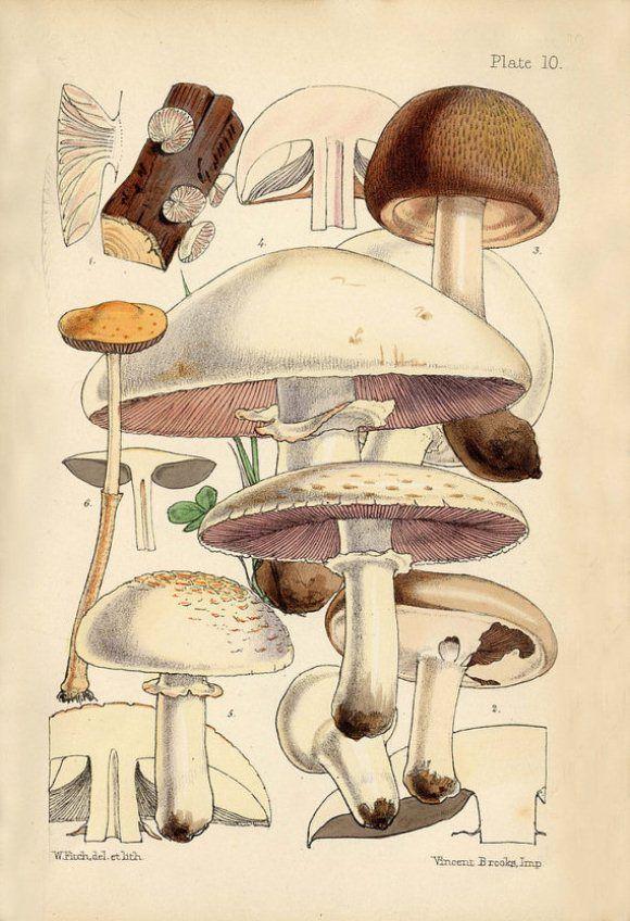 Botanical Art Prints: An Addiction | Free People Blog #freepeople