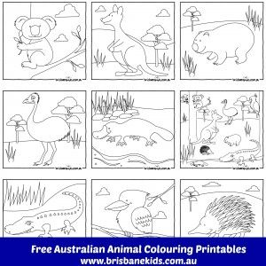free printable colouring in Australian Animals www.brisbanekids.com.au