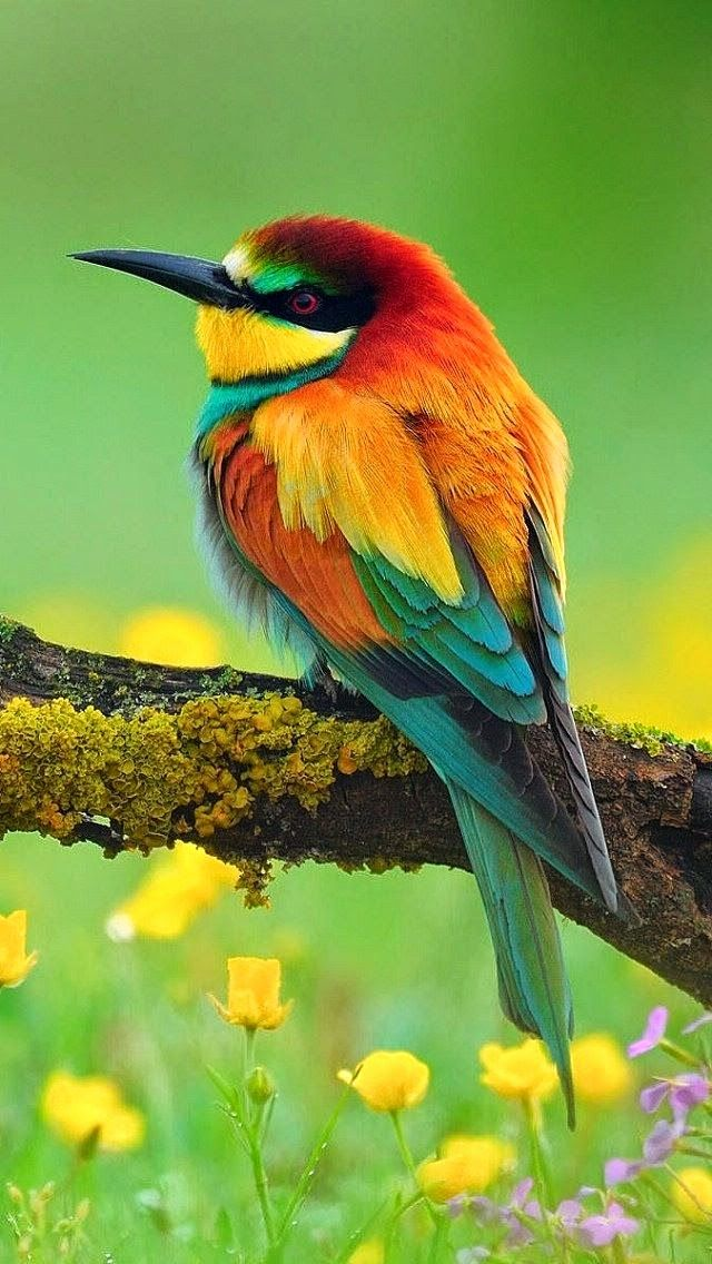 Spectacular Bee-eater ! God must have had a great time designing all the different colored birds and all the different kinds of birds.