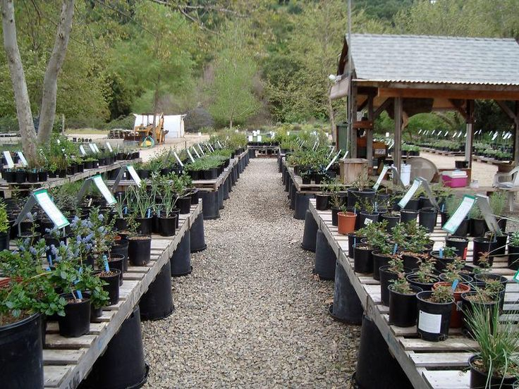 The retail section of our native plant nursery. It is set up for you to cruise…
