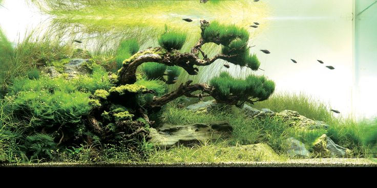 Aquascaping For Fish Aquarium | ... Guide to Aquascaping | Tropical Fish and Aquascaping Resource - Aquaec