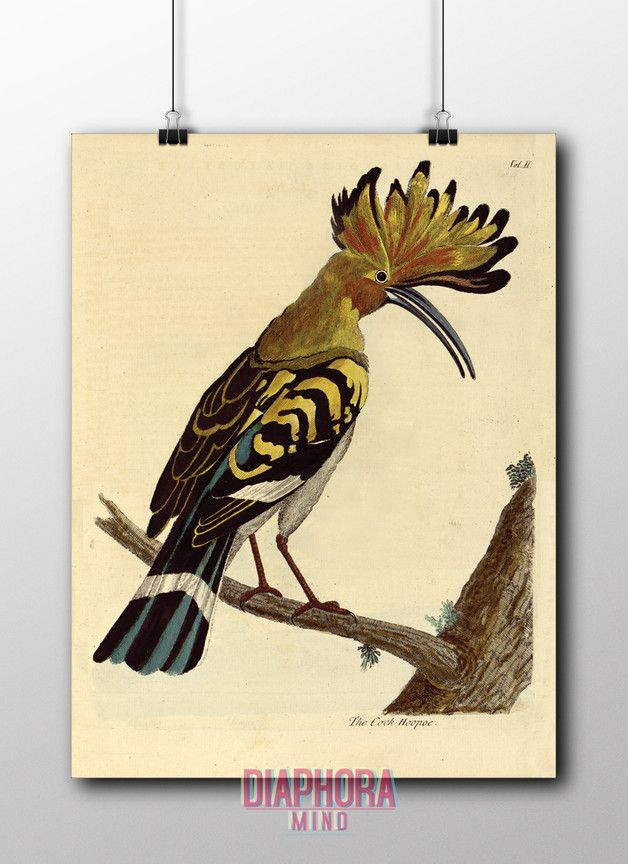 "Vintage Poster - PLAKAT VINTAGE VÖGEL""The cock Hoopoe""... - ein Designerstück von DIAPHORAmind bei DaWanda"