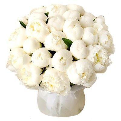 Букет из 25 белых пионов http://www.dostavka-tsvetov.com/cena/pion-snejnij