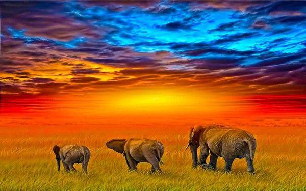 Красочный закат слон мозаика алмазный крест живопись сшить полный квадрат дрель холст комната горный хрусталь вышивка DX13