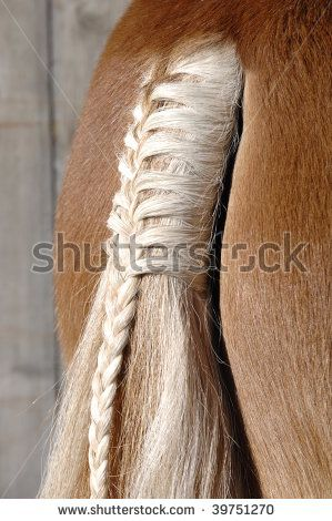 a braid at a horse tail by filmfoto, via ShutterStock