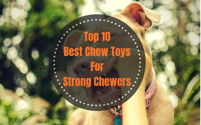 Best Chew Toys For Strong Chewers Top 10 Picks In 2020 Toys