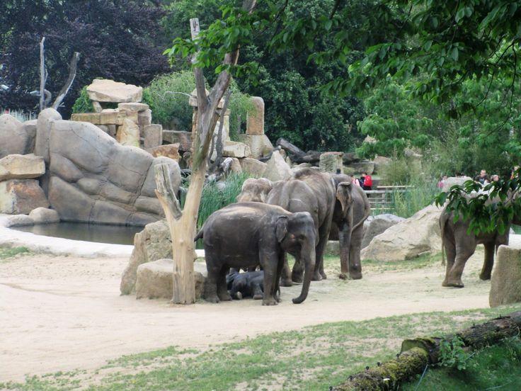 Sloni v ZOO Praha