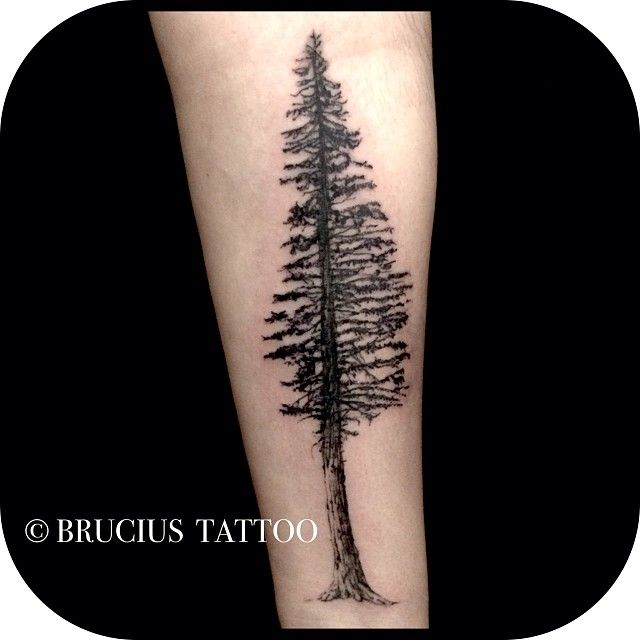 california redwood tattoo - Google Search