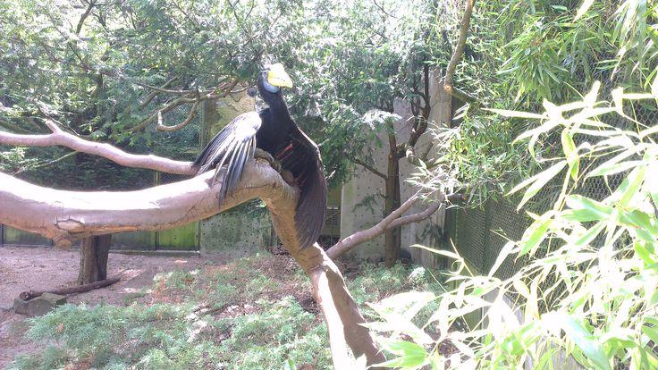 neushoornvogel in Artis