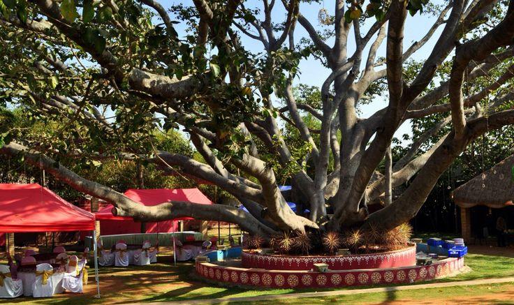 India. Tree.