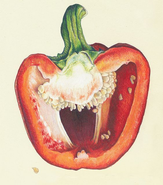 Look what you can do with markers, bic pen and colored pencils! PEPPERS_close2 by cmcleanart, via Flickr