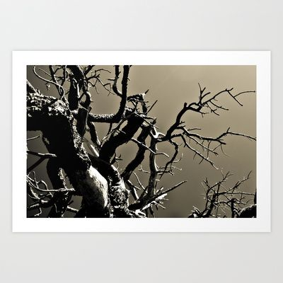 World of Trees Art Print by Tim Eisenhauer - $17.68