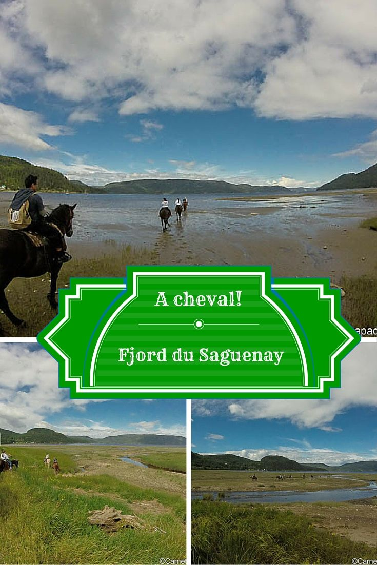 1000 idées sur le thème Cheval Fjord sur Pinterest