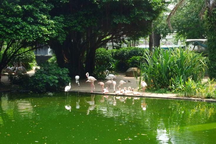 Flamingo at Kowloon Park