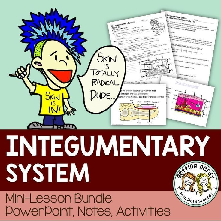 integumentary system lesson plan This back to school lesson plan expains the anatomy of skin in this series explain to students that this is the nail root and is part of the integumentary system.