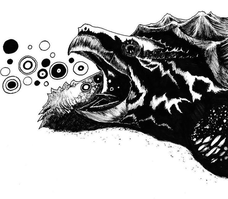Alligator snapping turtle blowing bubbles.