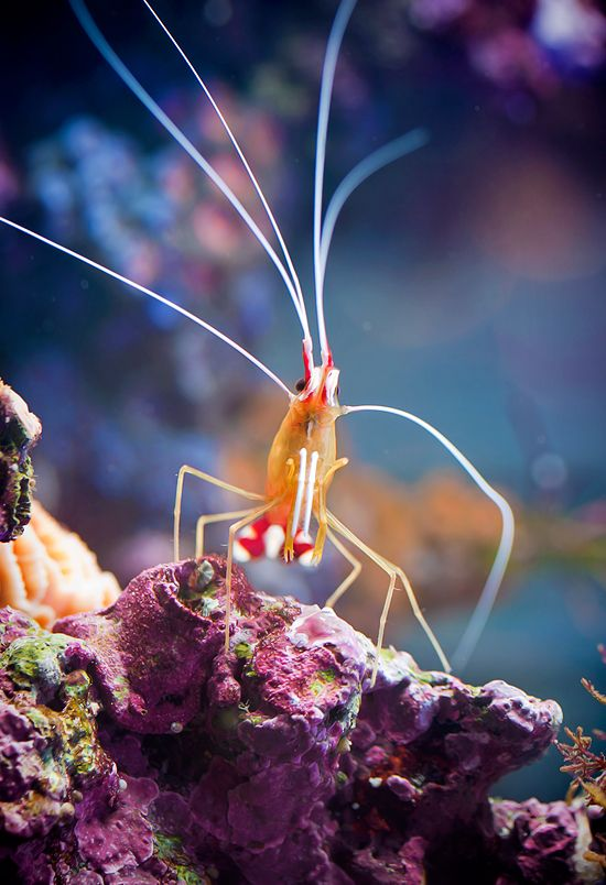 *Shrimp are so cute.  Life underwater is a whole new world.