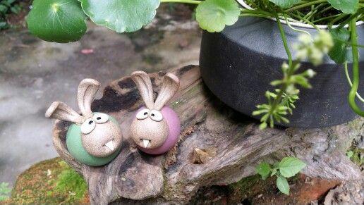 Lovely rabbit!!!
