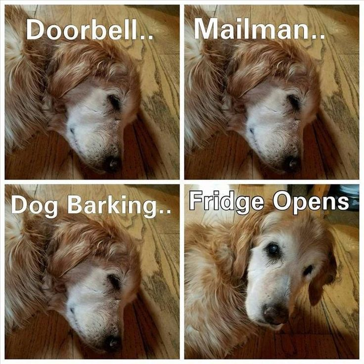 Funny Animal Pictures Of The Day – 18 Pics #funnypics #funny #lol