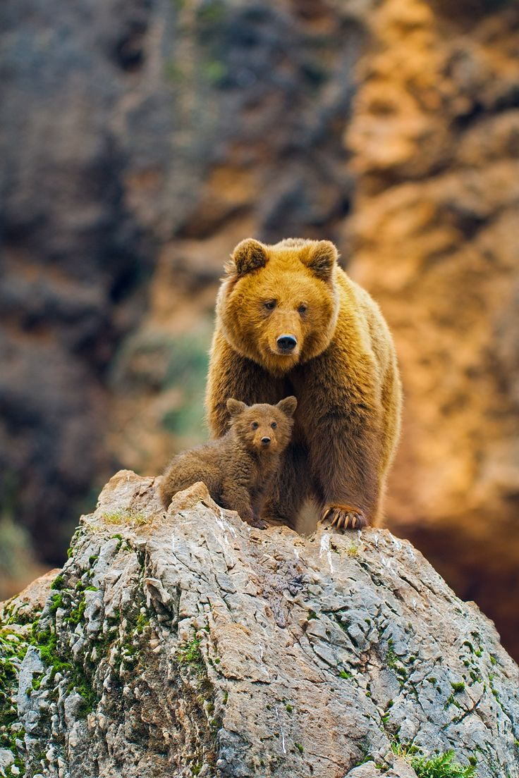 Brown bears by Rob Janné on 500px