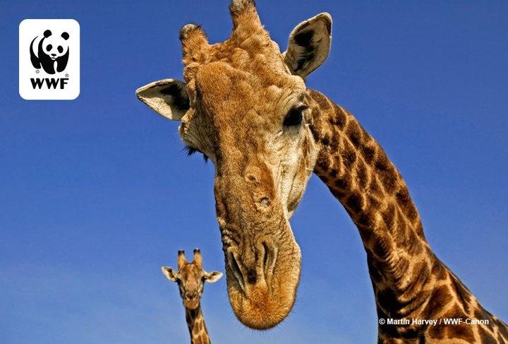 Güney Afrika @WWF_TURKIYE