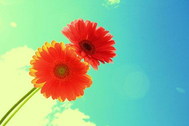 This is 101 of the most inspiring, touching and helpful thoughts from the past on happiness.