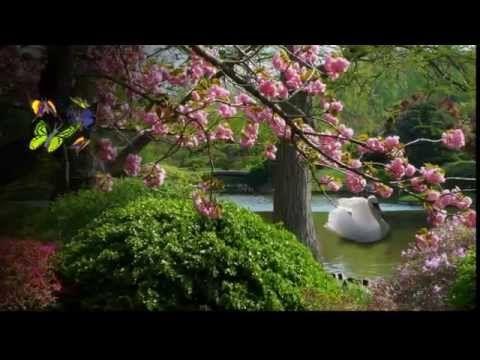 весна в японии 1