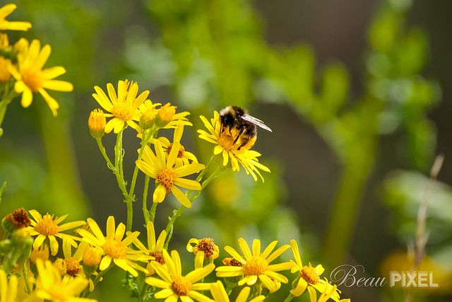 Flower and Bee | By Beau Pixel via Flickr