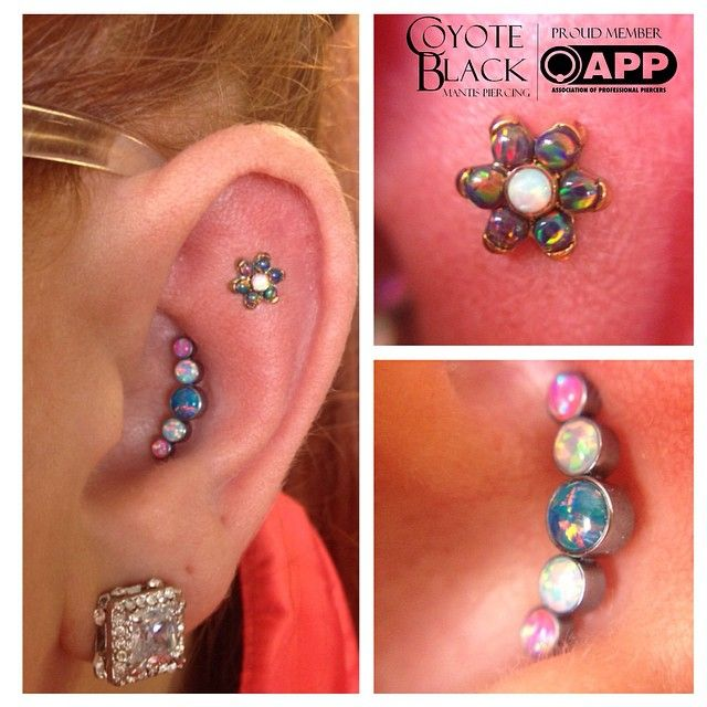 """mantispiercing: """" Fun! Swapped her existing healed conch piercing out for a 5 opal cluster and we pierced her outer conch with a rad black and white opal flower. All jewelry by @anatometalinc !..."""