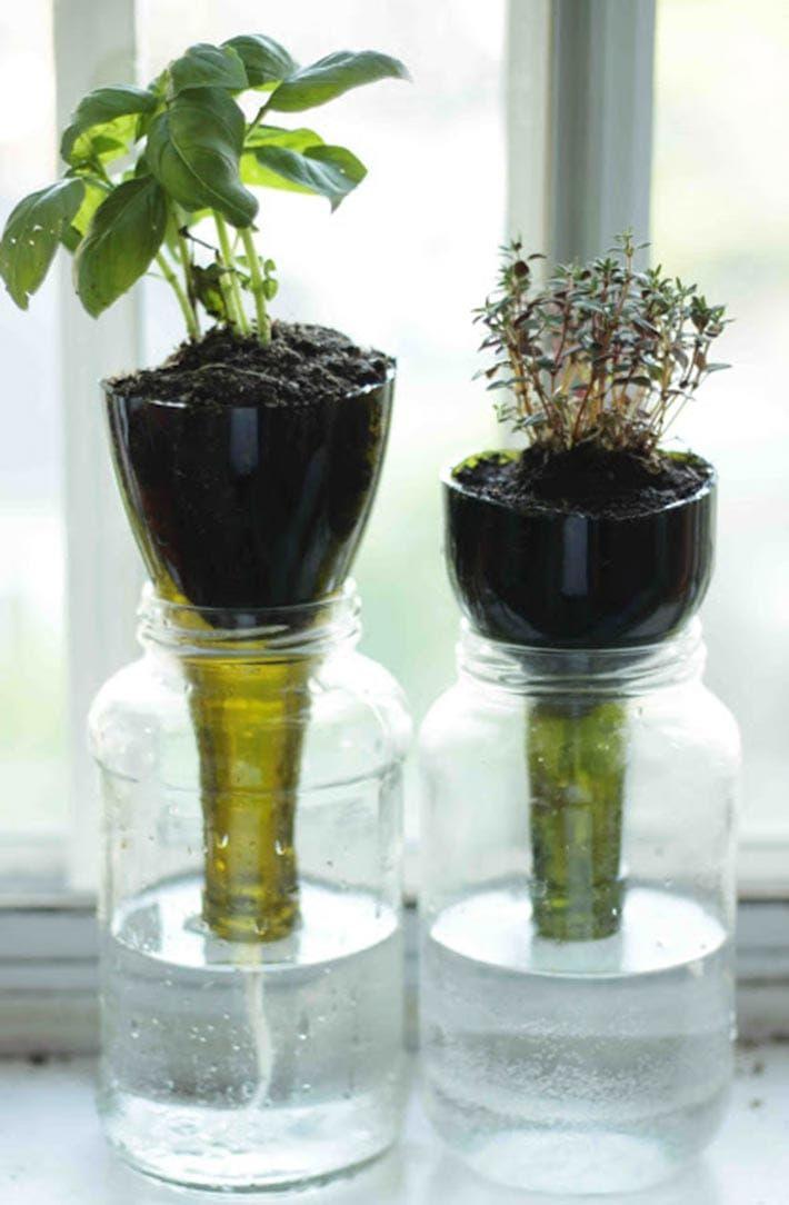 Organizzare le erbe aromatiche in casa: piante posizionate dentro i fondi di bottiglia - #DIY #herbs #organize #homeideas