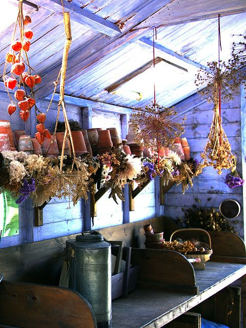 Dried flowers in the potting shed