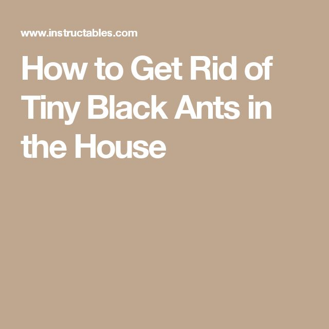Best 25 Black Ants Ideas Only On Pinterest Ants In Garden Lemon Grass Plant And Paper Goods