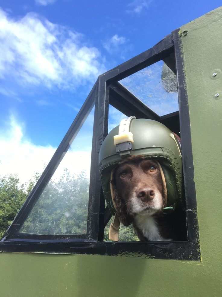Sprocket had a great time at Braunton wheels and got to meet the air cadets of squadron 22 #heilcopter #dogsoftwitter