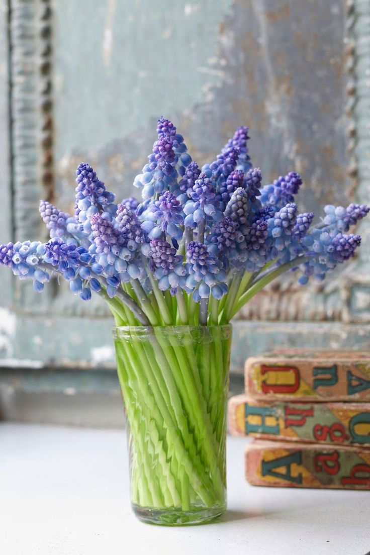 Grape-hyacinth bulbs are fantastically easy to grow and their tonal blue flowers, which blossom in April, make a delightful, lightly scented bedside posy. Display them in a simple, clear glass vessel to allow the acid green of the stems to work against the blooms.   From [i]Bringing Nature Home: Floral Arrangements Throughout the Seasons[/i] by Ngoc Minh Ngo (Rizzoli, £28). Photography by Ngoc Minh Ngo, flowers by Nicolette Owen.