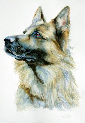 Watercolor of Rocky, German Shepherd Sally Robertson
