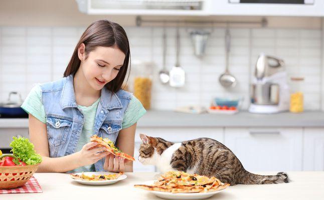 ماذا تاكل القطط من طعام البيت