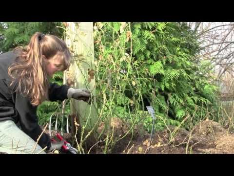 72 best Gardening Videos images on Pinterest Gardening tips