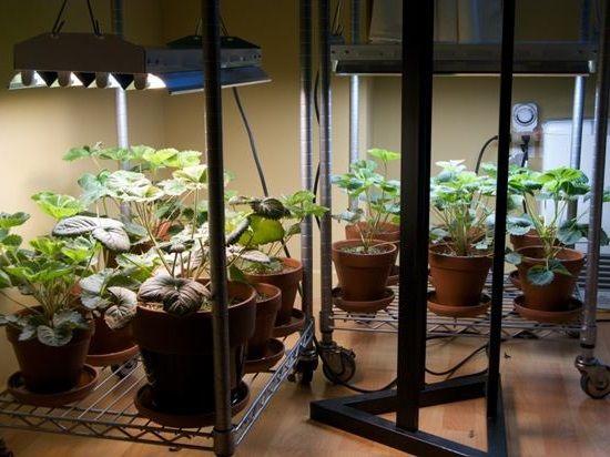 Fluorescent grow lights can grow plants indoors