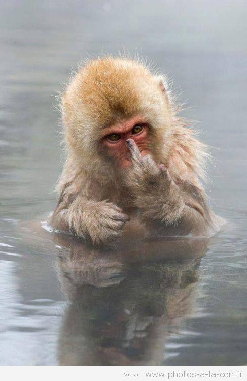 je ne sais pas à qui il montre ce doigt d'honneur mais il ne l'ai pas en tout cas!!!