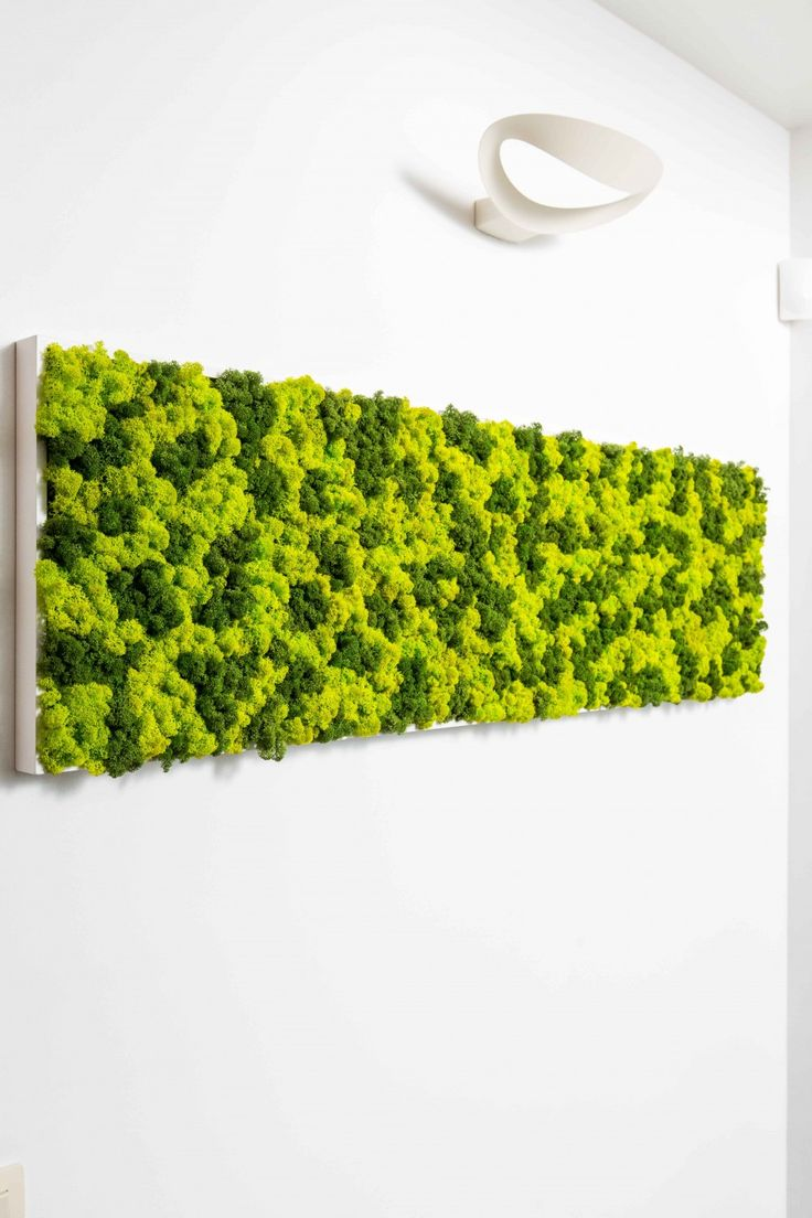 Livewall green wall system make conferences more comfortable - Discover The Possibilites Of Our Green Walls Green Frames And Customized Decoration Projects Made Of Preserved Moss And Plants