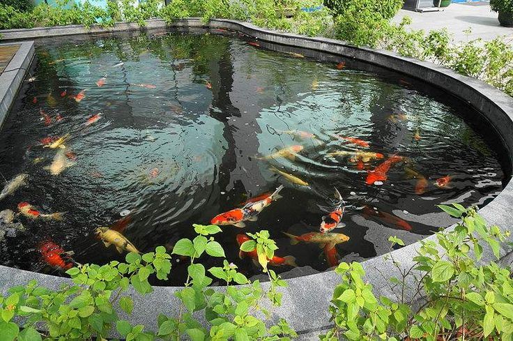 17 best ideas about pond design on pinterest ponds for Koi pond water murky