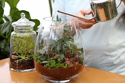 Terrarium - Live decor for the living room. Old bell jar or canister from thrift? lantern from HL?