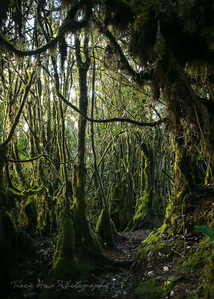The Mossy Forest - Cameron Highlands >> Tracie Travels | Travel Blog. Travel Photography. Travel Tips.