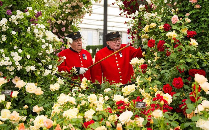 RHS Chelsea Flower Show 2015:Chelsea Pensioners Tom Mullaney (left) and Sandy Sanders view a display of roses
