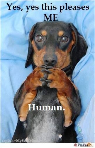 Could definitely hear my doxie saying this.... | Funny ...