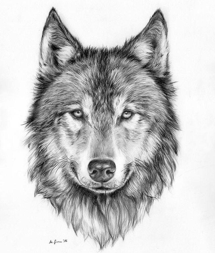 Фото тату эскизы волка